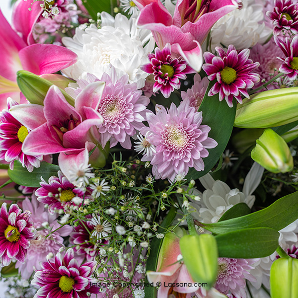 HEAVENLY BLOSSOMS - Lovely Lilies - in Sri Lanka