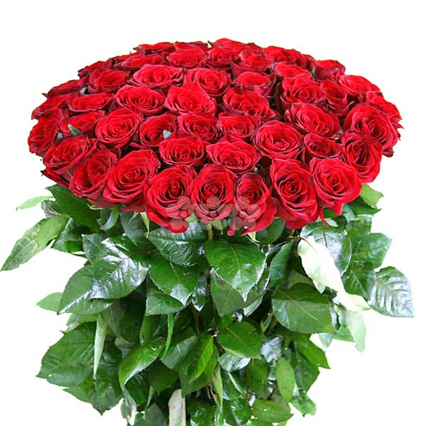 BUNCH OF 50 RED ROSES - Love & Romance - in Sri Lanka