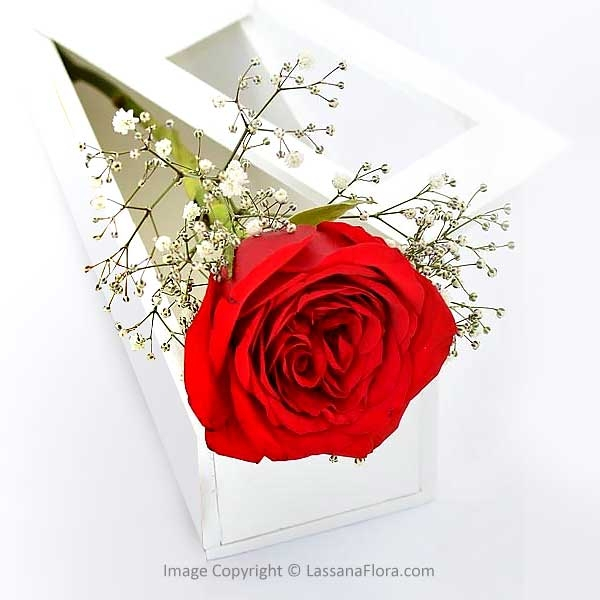 SINGLE ROSE IN A BOX - Love & Romance - in Sri Lanka