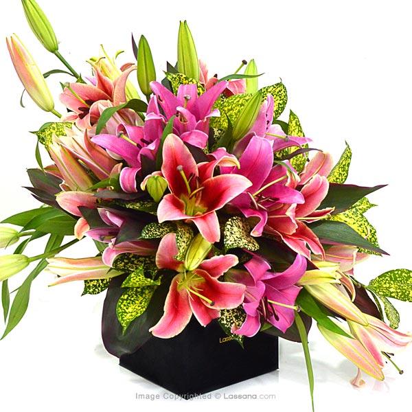 Pink Confetti ( Pink Lilies ) - Love & Romance - in Sri Lanka