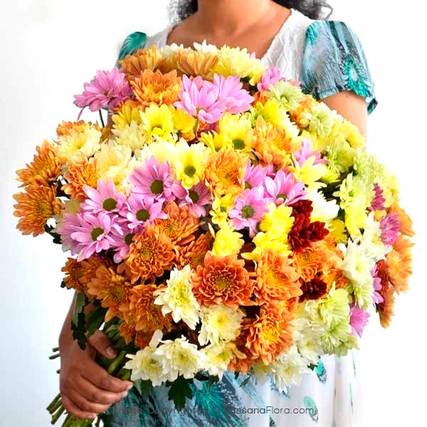 50 Stems of Chrysanthemum - Exotic Chrysanthemums - in Sri Lanka