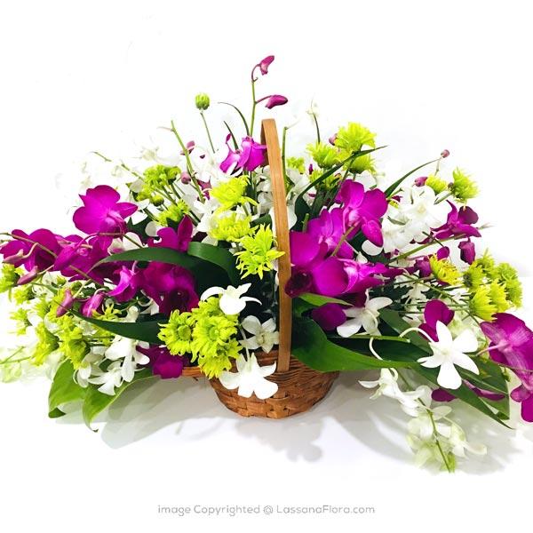 Elegant Orchid Basket - Corporate Gifting - in Sri Lanka