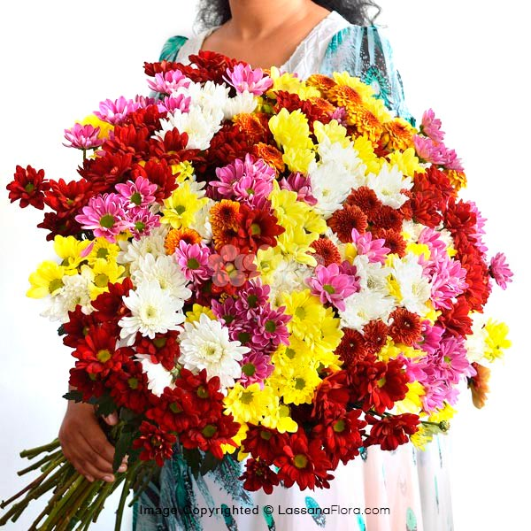 100 STEMS OF CHRYSANTHEMUM - Exotic Chrysanthemums - in Sri Lanka