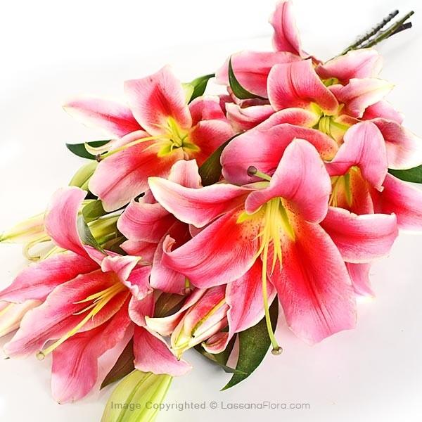 Pink Lilies ( Bunch) - Love & Romance - in Sri Lanka